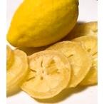 輪ぎりレモン やわらかドライ